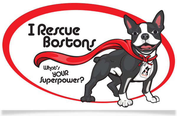 Boston terrier rescues canada