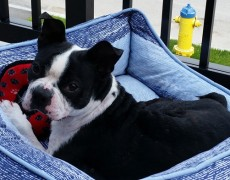 Adoptable: Edgar
