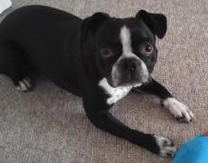 Adopted: Figo