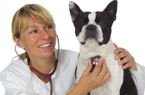 Heartworm – Better Safe Than Sorry