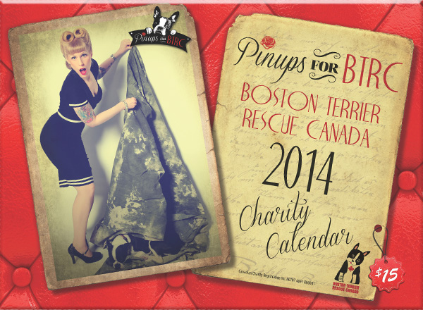 Paws up for our Pinups Charity Calendar 2014