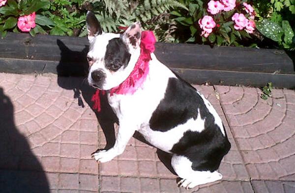 November is Adopt-A-Senior-Dog Month