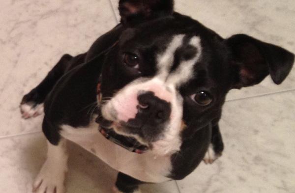 Adoption Update: Loca!