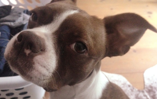 Adoption Update: Lucy!
