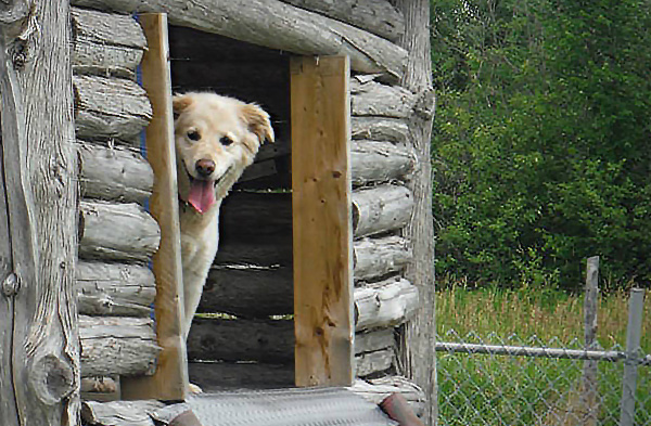 Huge Thanks to Dog World Bedrock Kennels