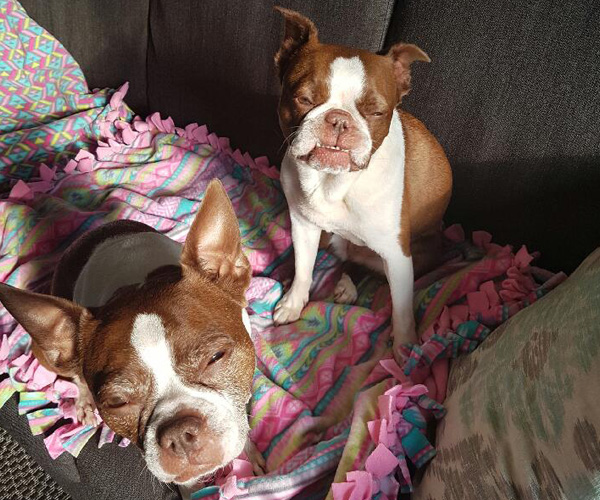 ADOPTED: Lucy & Ethel