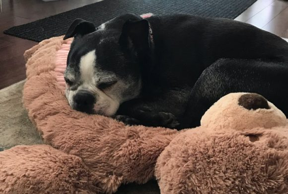 Adoption Update: Jinny!
