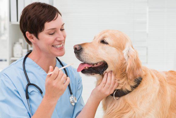 Dental Disease in Senior Dogs