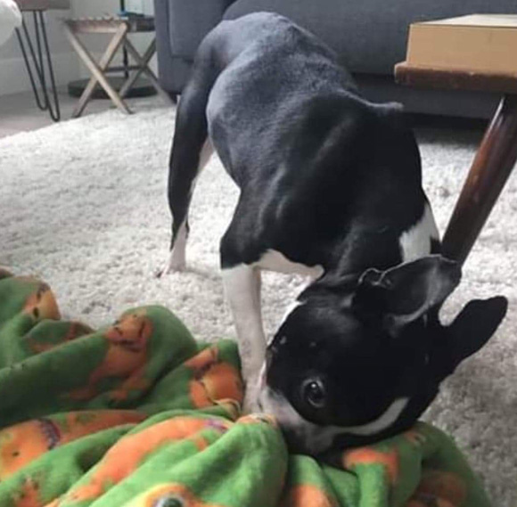 ADOPTED: Petrie